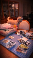 Cairn Terrier dog on table with stacks of photos.